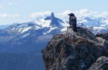voron-gory-kamni-ptica