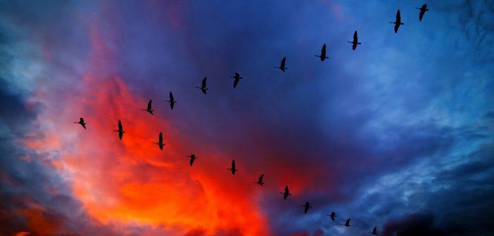 nebo-oblaka-tuchi-zakat-zarevo-2173
