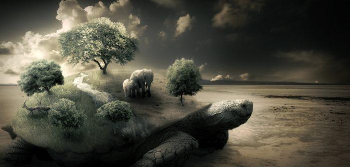 Fantasy_Elephants_on_a_turtle_on_the_beach_101474_